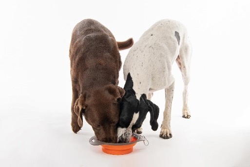drinking-dogs
