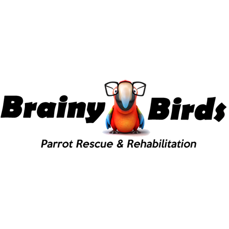 Brainy Birds