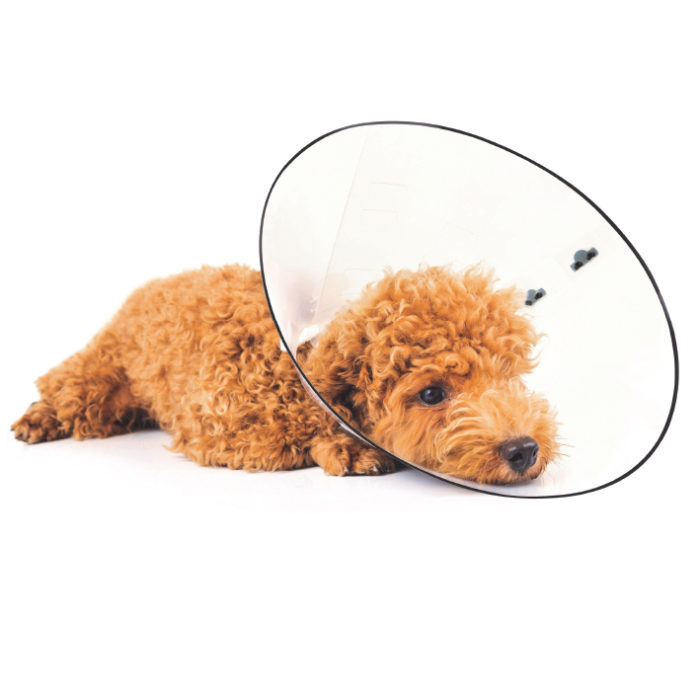 mpets_0022_bastion-protective-collar-lifestyle