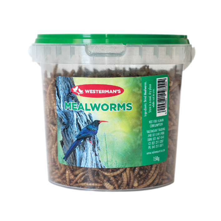 westermans_0009_mealworm-150